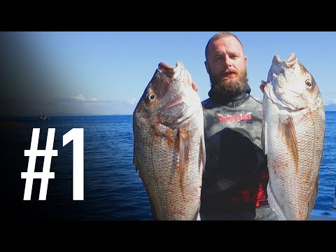 NEW ZEALAND SPEARFISHING DIARIES | PART ONE