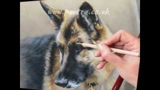 Speed Painting - Dog In Pastels - German Shepherd