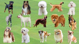 Dog Name list In English | Names Of All Dogs | Most Popular Dog Names | Dog Breeds Names