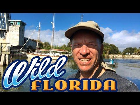 WILD FLORIDA Coast! Canaveral National Seashore