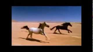 Gipsy Kings&Layla No Volvere Amore Mio (Arabic version)