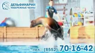 Новая программа с дельфинами.wmv