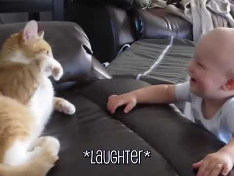 Download These Cats Will Make You Laugh Your Head Off - Funny Cat Compilation