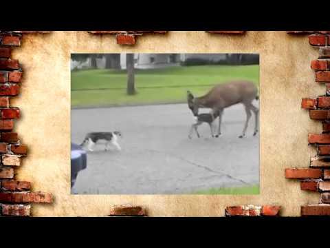 смешные видеоподборки про собак