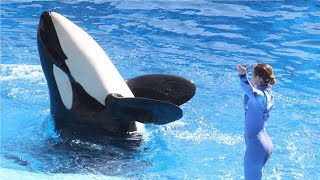 SeaWorld  Killer whale shows controversy and more   Compilation