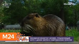 Москвичей возмутил человек, предлагающий фото с диким зверем - Москва 24