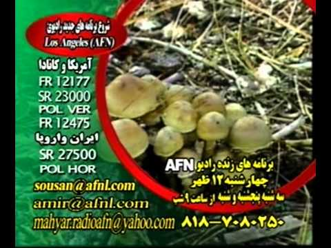 FARSI RADIO IRAN AFN MUSIC PERSIAN