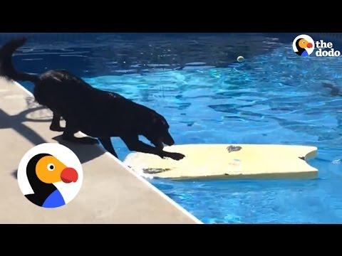 Smart Dog Gets Ball From Pool Without Getting Wet | The Dodo