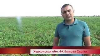 видео Технология выращивания помидоров из семян в открытом грунте