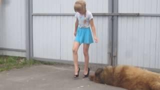 При виде этих ножек даже собака склонила голову )))