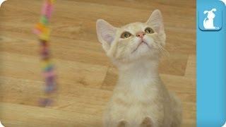Kitten Jumps High For String - Kitten Love