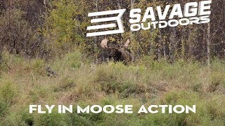 Fly in Moose Action - Savage Outdoors