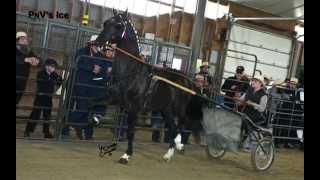Carson's Auctions presents Dutch Harness Stallions 2014