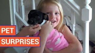 Amazing Pet Surprises - Cute Animal Video Compilation 2016