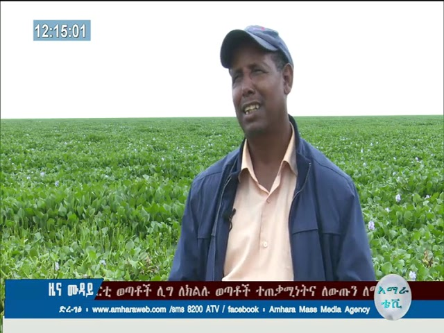 The Sea Weed Occured In Lake Tana Engulfed 21 Kebeles Found Around The Lake