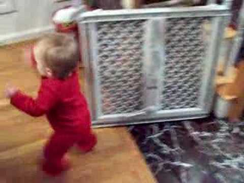 Baby and Maine Coon Cat Play