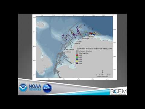 Strait Science : Chukchi Sea Life - Part 3