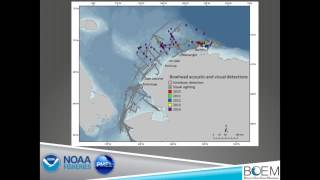 Strait Science : Chukchi Sea Life - Part 3