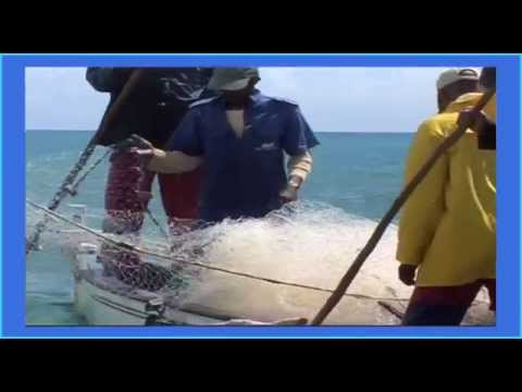 ILE RODRIGUES documentaire RODRIGUES le défi d'une île partie 2