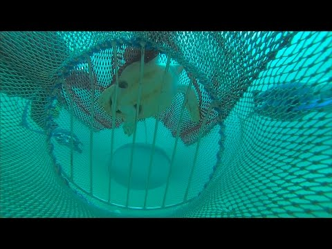 Tackling Bycatch In U.S. Fisheries