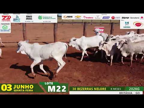 LOTE M22