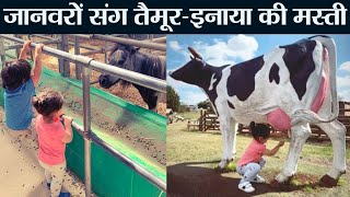 Taimur Ali Khan & Inaaya Naumi enjoy with animals in dairy farm; Check out | FilmiBeat