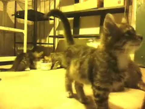 Highway Kittens
