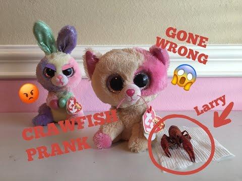 f9efeab6cbc Beanie Boo s  CRAWFISH PRANK GONE WRONG!