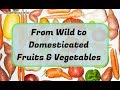 Transformation of Food From Wild Vegetables and Fruits to Their Domesticated Varieties