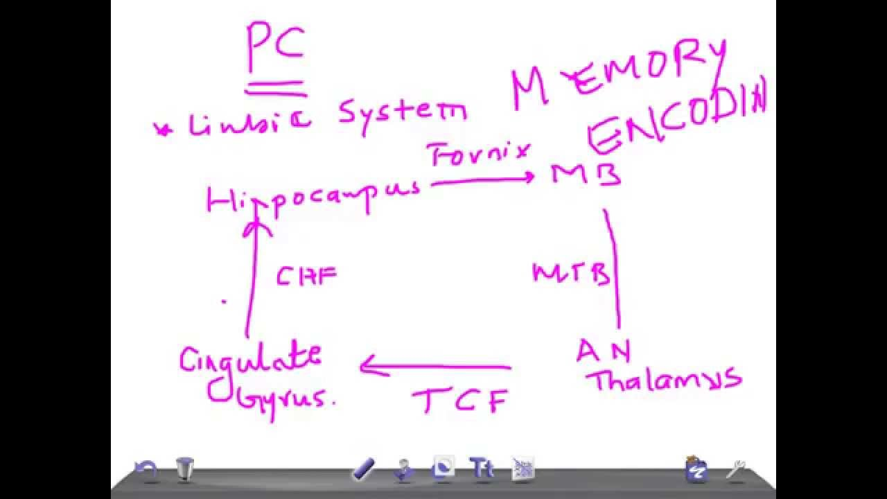 Medical Video Lectures  Papez Circuit  U0026 Its Functions