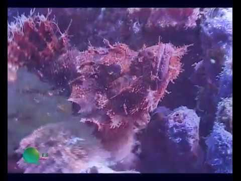 Diving Spraty Islands