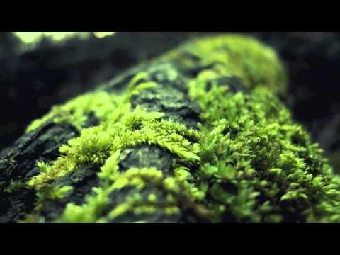 Document One - Forgive Me (Heist Remix)