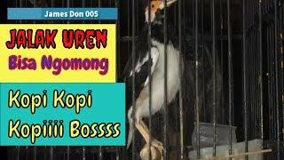 Video Jalak Suren Ngomong Kopi Bos download MP3, 3GP, MP4, WEBM, AVI, FLV Juni 2018
