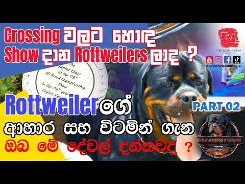 Rottweilersගේ  ආහාර සහ විටමින් ගැන  – Part 02 | Rottweilers Dog Diet and vitamins Sinhala Review