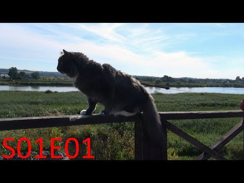 Hiking with Benek The Norwegian Forest Cat - Big river [S01E01]
