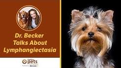 Dr. Becker Talks About Lymphangiectasia