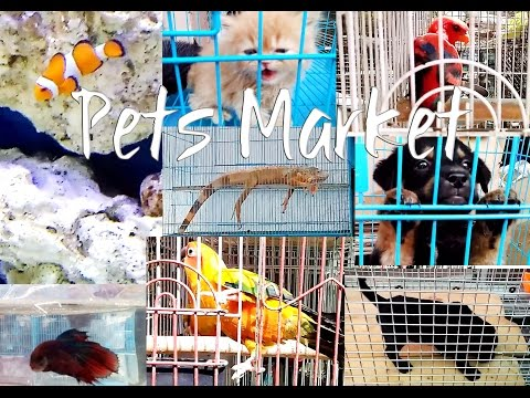 Crawford Market Mumbai | Fish, Dog, Cats, Iguana, Birds | ( Pets Market) | Mumbai |