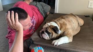 reuben-the-bulldog-let-me-tell-you