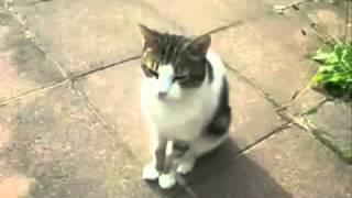 Топ 10 Смешных видео про котов Смешно до слез