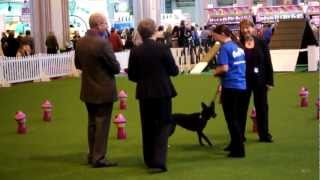 Kez In Ykc Starters Obedience At Crufts