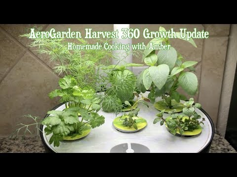 Miracle-Gro AeroGarden Reviews [Compare the Best Models for