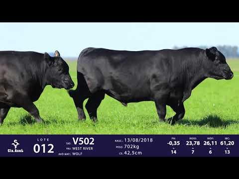 LOTE 12 - TAT V502 V566