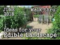 2018 June Urban Garden / Edible Landscaping Tour + Plant & Book Ideas (Albopepper Walk-thru)