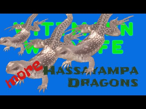 Wittmann Wildlife - More Hassayampa Dragons