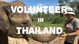 Volunteer Cambodia -Volunteer with Elephants- Reach Out Volunteers