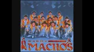 BANDA MACHOS RANCHERAS