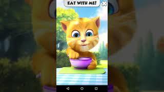 Mèo màu vàng tập ăn