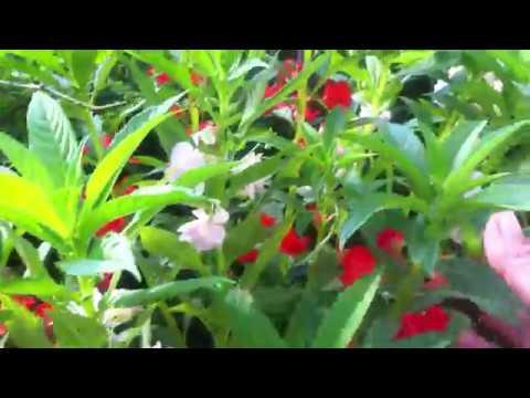 Plantas De Flores Belenes Blancos Naranjas Y Rosas