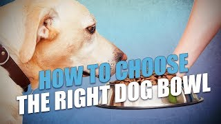 How To Choose the Right Dog Bowl