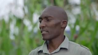 Shamba Shape Up Sn 06 - Ep 20 Fertilisers, Newcastle Disease, Financial Management(Swahili)